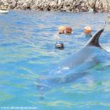 Jean-Louis le dauphin dans le port du Vorlen
